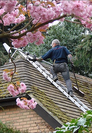 Our staff cleaning the moss from a roof in St Leonards near Hastings